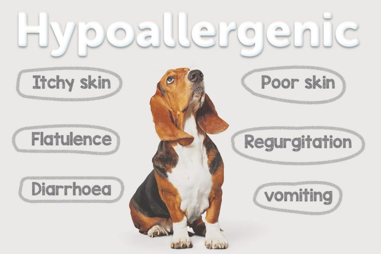 Dog Food – All You Need To Know About Hypoallergenic Recipes